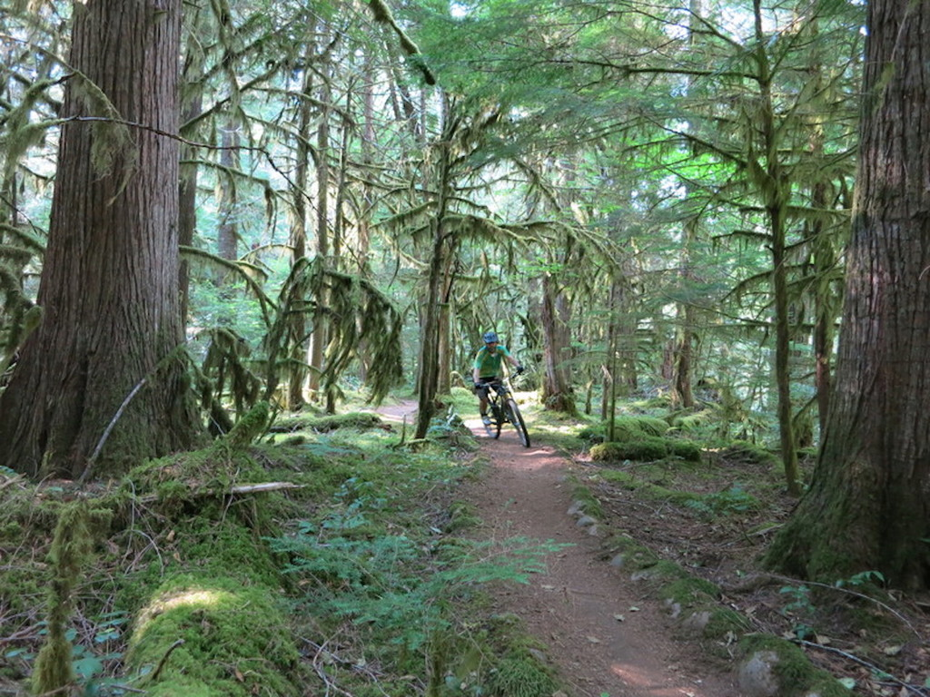 Name:  McKenzie River trail MTB.jpg Views: 168 Size:  305.9 KB