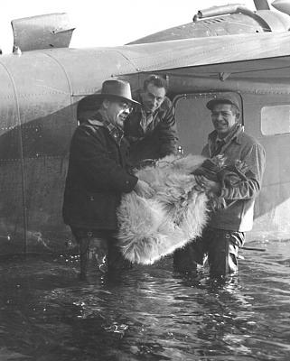 Click image for larger version.  Name:Mountain Goat Transplant.jpg Views:164 Size:135.9 KB ID:35826