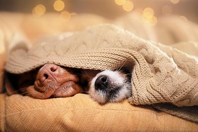 Click image for larger version.  Name:dogs.jpg Views:46 Size:178.3 KB ID:43665