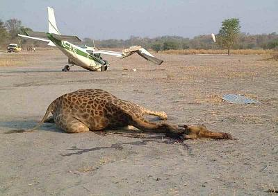 Click image for larger version.  Name:FOD in Africa.jpg Views:163 Size:54.5 KB ID:46010