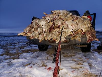Click image for larger version.  Name:Load of yotes.jpg Views:156 Size:109.2 KB ID:40885