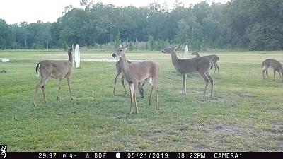 Click image for larger version.  Name:6 Deer.jpg Views:34 Size:177.9 KB ID:47169