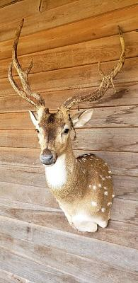 Click image for larger version.  Name:trophy animal 1.jpg Views:56 Size:109.2 KB ID:56498