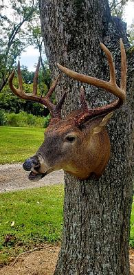 Click image for larger version.  Name:trophy animal 4.jpg Views:59 Size:164.2 KB ID:56500